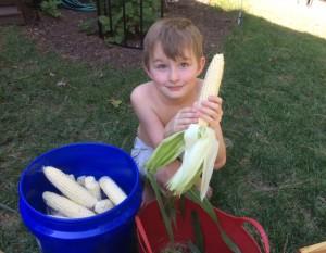 Corn Shucker