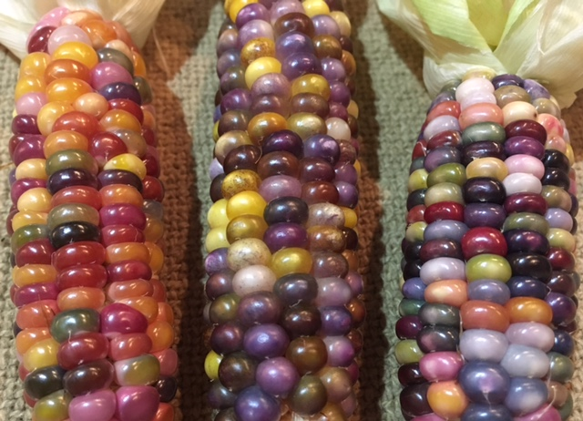 Glass Gem Corn Harvest