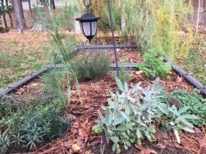 Herbs Before Winter