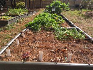 Naturally Mulched Garden Beds